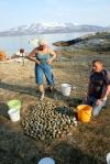 Eggene fordeles på tradisjonelt vis.